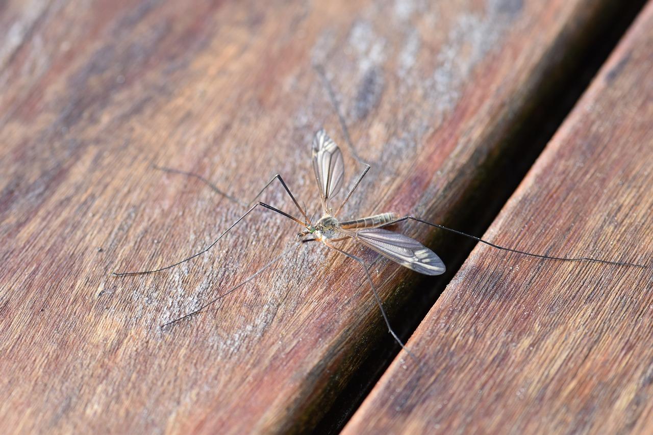 Komary, jak chronić małe dzieci i kobiety w ciąży ?